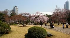 Tokyo Travel: Koishikawa Korakuen. Been to the one in Okyama; didn't know there was one in Tokyo!