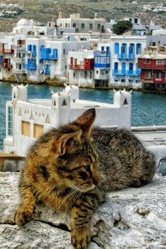 View of Little Venice, Mykonos. Click here to see all our Traveling Cats: http://www.traveling-cats.com