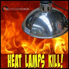 12-19-16 Minnesota. Heat lamp for chickens starts barn fire | Heat ...