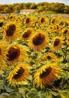 SUNFLOWERS OF THE LUBERON .......OIL PAINTING BY CAROLINE ZIMMERMANN......