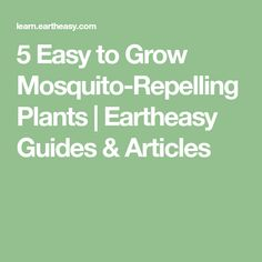 5 Easy to Grow Mosquito-Repelling Plants | Eartheasy Guides & Articles