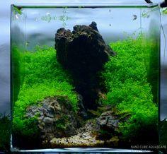 nano cube aquascape