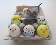 Super cute eggs! This little birdy reminds me of a bird I had when I was little.