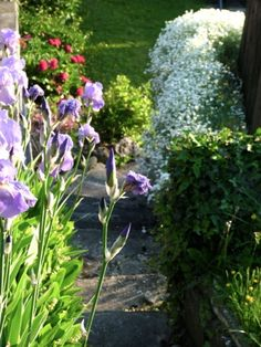 Le Jardin que J'Aime !
