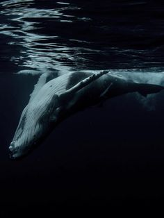 These pictures show what it's like to free dive with whales