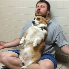 Marvin the corgi and his dad are very close, and love to do practically everything together.