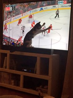 "Jennifer Ivy on Twitter ""@NHLCanes when you have a #Caniac cat. #NJDvsCAR #Redvolution #Catsofhockey"""