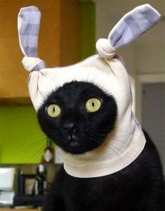 Cute cats with hats. Does your cat have a hat? Sit back and look at funny cats with hats. Funny Animal Pictures, Cute Funny Animals, Funny Cats, Cats Humor, Chat Bizarre, Animal Memes, Cat Memes, Memes Humor, Funny Humor