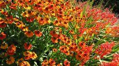 #LoveFlowers Featured Garden: Wonderful flowers - Come explore and visit the gardens @BrisBotanicGdn