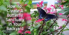 How To: Create A Butterfly Sanctuary in Your #Backyard! #landscaping #garden