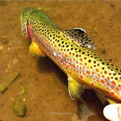 Follow us. See more Fly Fishing Tips !