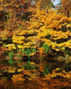Autumn Colours by DWRose, via Flickr