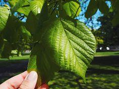 Green leaf, so zen! Love nature photos!