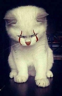 Funny Animal Pictures, Cute Funny Animals, Cute Baby Animals, Animals And Pets, Cute Cats, Funny Cats, Scary Funny, Creepy, Image Chat
