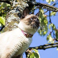 Cat Collar Breakaway Safety Bow Tie and Friendship Bracelet Pet Soft Adjustab...