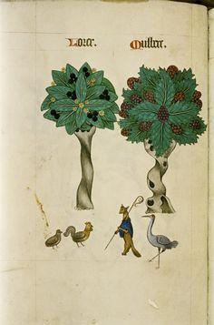 http://upload.wikimedia.org/wikipedia/commons/c/c0/The_Tudor_pattern_book_MS._Ashmole_1504_41.jpg