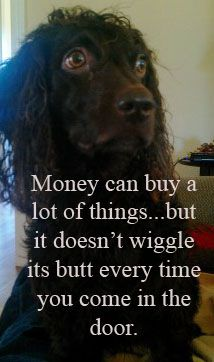 Money can buy a lot of things...but it doesn't wiggle its butt every time you come in the door.