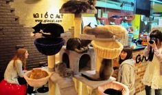 Now not just in Tokyo-Cat-cafe-to-open-in-london-east-end-caffe