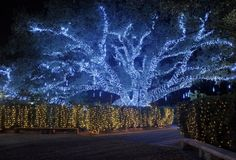 12 Things to do in New Orleans over the holidays New Orleans Christmas, Christmas Events, Christmas Travel, Christmas Vacation, Christmas Lights, Christmas Trips, Christmas 2016, Celebration In The Oaks, New Orleans Travel