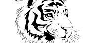 Coloriage Tigre du Bengale