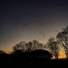 【nekotea_skywalker】さんのInstagramをピンしています。 《The Dark Sky And Crows. Tokyo Mizumoto Park. 葛飾水元公園にて  #葛飾 #水元公園 #夕焼け #夕焼け雲 #グラデーション #森 #カラス #tokyo #sunset #sunsets #sky #redsky #skyporn #forest #trees #park #japan #poplar #eyeem #eyeemoninstagram #gradation #crow #darksky》