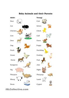 7 Worksheets Baby Animals Two pages e with a list of animals and their babies with √ Worksheets Baby Animals . Here S Set Of Cards for Matching Baby Animals to their English Words, English Lessons, English Grammar, Teaching English, Learn English, English Language, Animal Worksheets, Animal Activities, Printable Worksheets