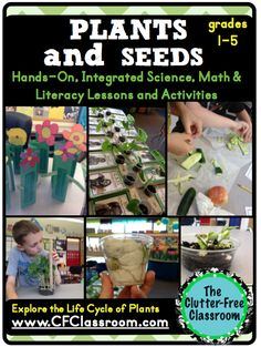 Life Cycle of Plants {Differentiated, Open-Ended Activities, Journals, Vocabulary, Portfolio, Lapbook}