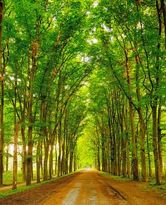 Forest road (Netherlands) by Everett Porter