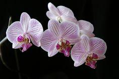 Каким способом восстановить эти цветы и за ними ухаживать?