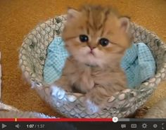It's Monday. Cheer Yourself Up with Cricket the Squeaky Kitten