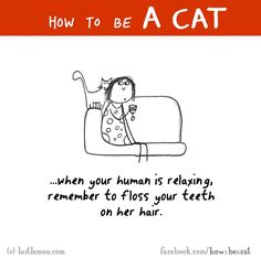 HOW TO BE A CAT: When your human is relaxing, remember to floss your teeth on her hair. I Love Cats, Cute Cats, Funny Cats, Crazy Cat Lady, Crazy Cats, How To Cat, Cat Comics, Kitten Care, Unique Cats