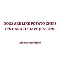 Do you agree? 🙋🏼♀️ . . . #thesharperbarker #dogquotes #happiness #instaquote #quoteoftheday #qotd #thoughtoftheday #typography #words #quotestagram #luxurydog #yvrpets #petbrand #dogbrand #yvrdogs #buzzfeedpets #dogparents #instadogs #doglife #furbaby #dogstagram #puppylife #dailydog #mykidshavepaws #puppytales #dailybarker #excellent_dogs #ruffpost #bestwoof #dogsofcanada Dog Branding, Dog Hoodie, Thought Of The Day, Dog Quotes, Dog Life, Best Dogs, Quote Of The Day, Fur Babies, Typography