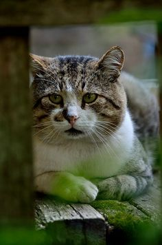 Green painted legged cute kitty..