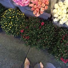 Caitlin Hartley of Styled American blogger in nude pumps next to flower stand http://styledamerican.com/my-first-instagram-roundup/