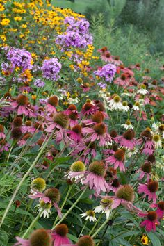 Chanticleer Gardens - Echinacea, phlox and rudbeckia make a colorful summers display on the edge of the Tennis Court Garden. Photo by Lisa Roper
