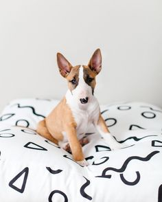 @ penny.thebully on Zana Products Floor Cushion - Cute Dog Bed