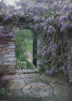 Open garden, stone wall and wisteria