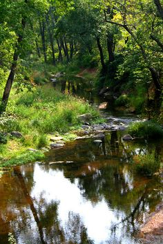 oak creek canyon, az Camped here with my Grether family in the summertime while growing up.  My Dad's family moved to Phoenix when I was a young girl.