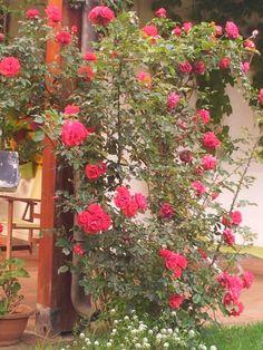Giardini di maggio