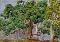 An Old Currajong Tree in rural New South Wales, Australia by the great botanical artist Marianne North