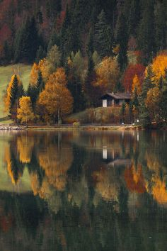 Give me CPR!! Autumn at the lake by  razvan macavei