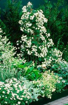 MIXED BORDER OF CRAMBE CORDIFOLIA & HOSTAS WITH ROSA 'SEAGULL' ON BAMBOO PYRAMID. HOMES & GARDENS 'THE GARDEN OF REFLECTION' DESIGNED BY A. ARMOUR WILSON & P. ROGERS. CHELSEA 2000