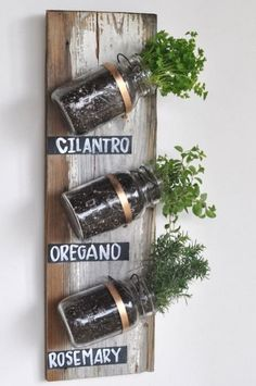 and i shall have an indoor herb garden! Mason jar herb garden ?Follow us? Indoor Herbs, Herb Plants, Indoor Plants, Potted Herbs, Small Plants, Herb Gardening, Verticle Herb Garden, Herbs Garden, Pallet Gardening