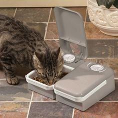 PetSafe® 2-Meal Automatic Feeder