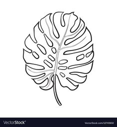 Full fresh leaf of monstera palm tree, sketch style vector illustration isolated on white background. Realistic hand drawing of monstera palm tree leaf, jungle forest design element , Palm Tree Sketch, Palm Tree Drawing, Tree Sketches, Leaf Drawing, Palm Tree Leaves, Palm Trees, Leaves Sketch, Leaf Illustration, Forest Design