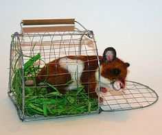 Traveling Hamster with Cage Annette Himstedt, John Wright, Charlie Bears, Animal House, Felting, Cage, Wildlife, Traveling, Miniatures