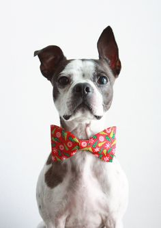 Christmas Tree Dog Bow Tie