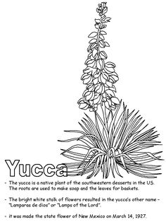 courage yucca flower coloring page