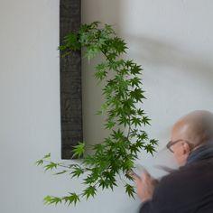 Flower Bowl, Flower Art, Arreglos Ikebana, Bonsai Tree Care, Cinder Block Garden, Plant Projects, Japanese Flowers, Small Garden Design, Small Plants