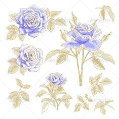 Collection of blue roses with leaves, isolated on a white background. Design elements.